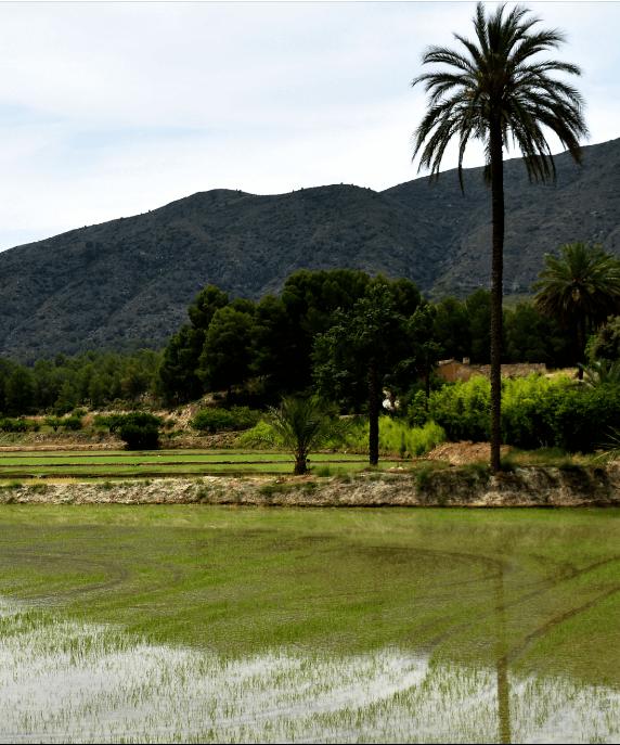 enoturismo-arrozal